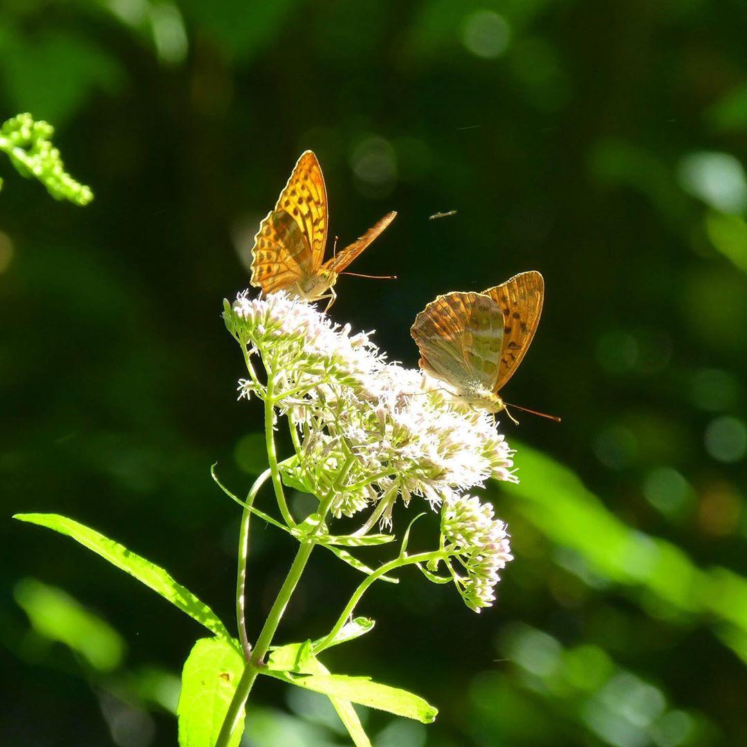 papillons posés sur une fleur
