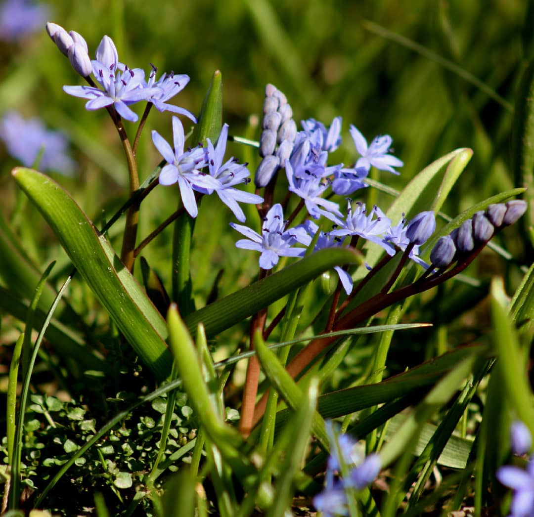 fleurs de la robertsau