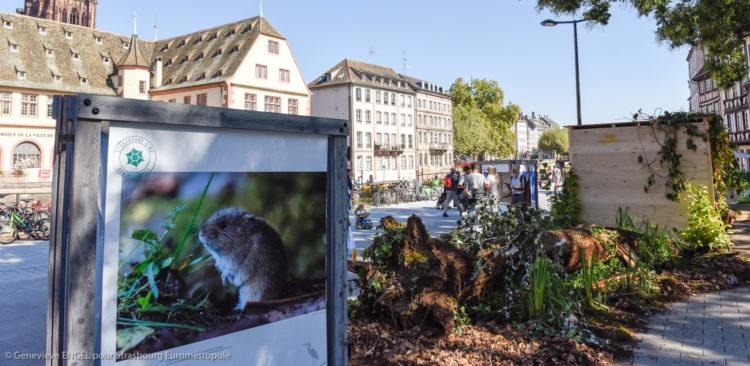 La nature s'invite en Ville-Place corbeau; cabane a oiseaux; Rohrschollen; service des espaces naturels; nature; oiseaux; végétation